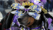 Ravens Super Bowl Rally Bel Air Friday [Pictures]