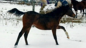 Pulaski County ranch owners dealing with death of beloved horse following Wednesday's storm