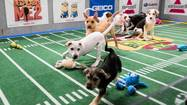 "Things promise to get ruff Sunday as Animal Planet's ""Puppy Bowl IX"" goes snout-to-helmet with the Super Bowl for ratings gold."