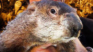 PUNXSUTAWNEY, Pa. (AP) — An end to winter's bitter cold will come soon, according to Pennsylvania's famous groundhog.