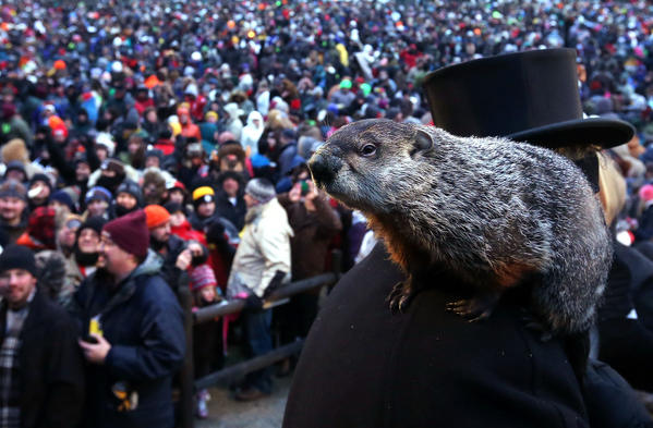 Punxsutawney Phil climbs on the shoulder of groundhog co-handler John Griffiths after Phil didn't see his shadow and predicting an early spring during the 127th Groundhog Day Celebration at Gobbler's Knob on February 2, 2013 in Punxsutawney, Pennsylvania.