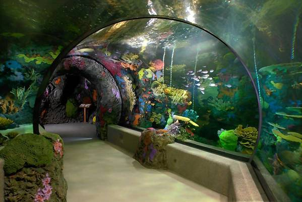 The Virginia Aquarium is offering a buy one, get one half-off promotion for Valentine's Day.