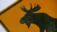 Hot Spot Hunt to Decrease Moose-Vehicle Collisions