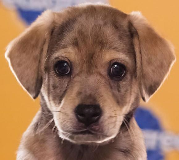 'Puppy Bowl IX': Meet the 2013 starting lineup: Breed: Catahoula mix  Age: 10 weeks