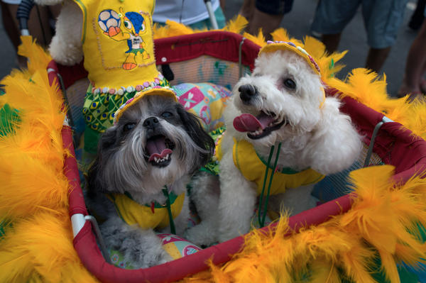 Dogs wearing carnival costume take part in the animals' carnival, in Copacabana beach in Rio de Janeiro.