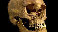 Scientists identify remains as those of King Richard III