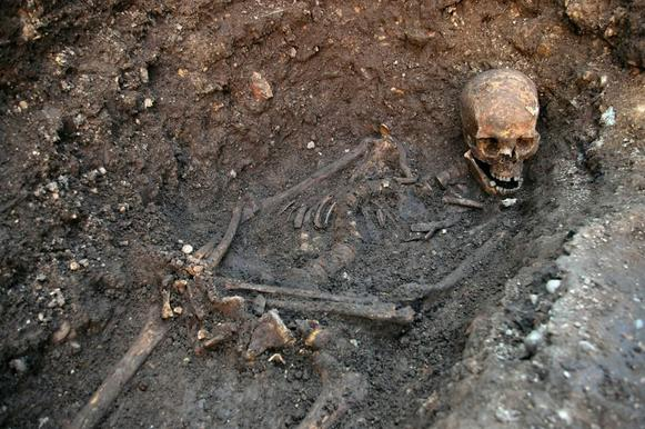 A photo released by the University of Leicester shows the recently uncovered skeletal remains of English King Richard III, who was killed at the Battle of Bosworth Field in 1485.