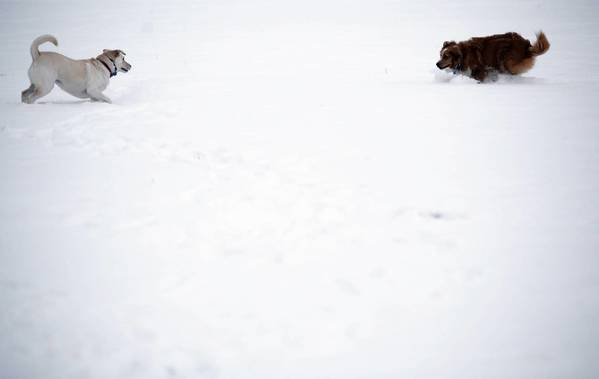 Mara, left, and Jazz play in a field of snow at the former site of the Jane Addams Homes near Taylor Street in Chicago.