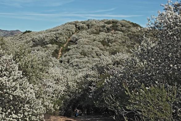 The trail starts at Leo Carrillo State Park near the L.A.-Ventura County border. It's a steep gain -- almost 1,800 feet in elevation -- but the payoffs in blossoms and ocean views make it well worth the effort.