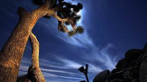 Southern California Close-Ups: Joshua Tree National Park and Desert Hot Springs