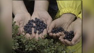 2 Your Health: Blueberries