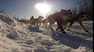 Race officials for the Tustumena 200 Sled Dog Race say two dogs died during last weekend's race.