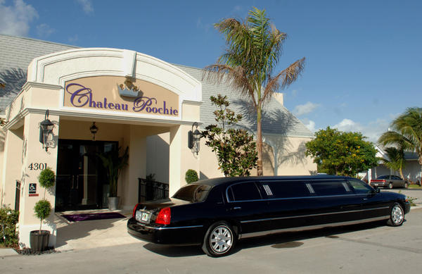 Chateau Poochie, a luxury dog resort and spa in Lighthouse Point, provides limo service for its VIP customer's dogs.