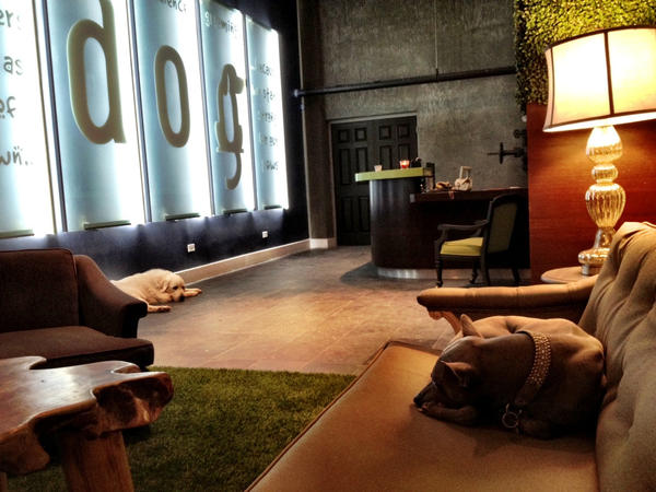 A guest at d.o.g. relaxes in the lobby of this former Wynwood art gallery, now a luxury dog hotel. d.o.g is a luxury dog hotel that recently opened up inside a former art gallery in Wynwood Miami.  Dogs there have private rooms with glass doors, yoga classes, Skype sessions with their owners and nap time in a Zen soundproof room.