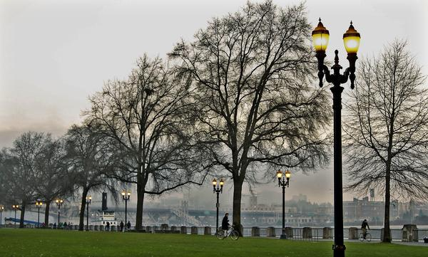 The trees in winter in Gov. Tom McCall Waterfront Park in Portland, Ore.