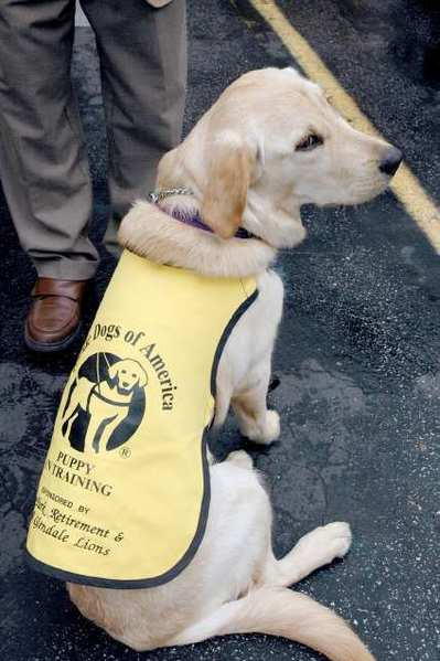 Cybelle models her puppy-in-training vest during a visit to the Northwest Glendale Lions Club.