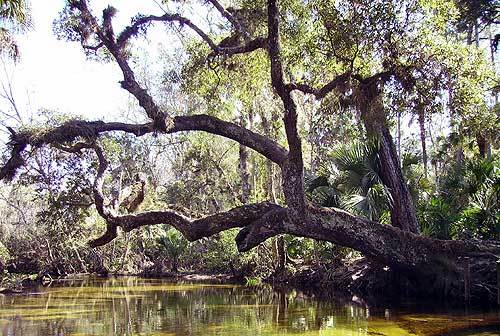 Florida Getaways of the Day - <b>Apopka:</b> A scenic, serene canoe run