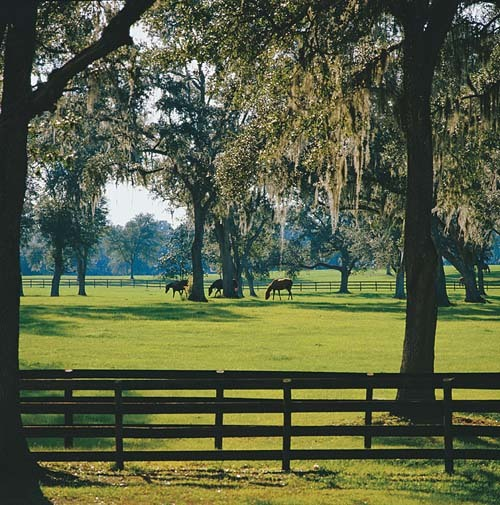 Florida Getaways of the Day - <b>Ocala:</b> Breeding ground for thoroughbreds