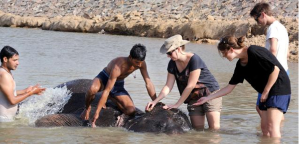 Volunteers help bathe elephants in Jaipur, India.