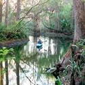 <b>Jupiter/Tequesta:</b> Secrets of the Loxahatchee River