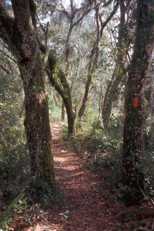 Florida Getaways of the Day - <b>Ocala National Forest:</b> You can hear the trees