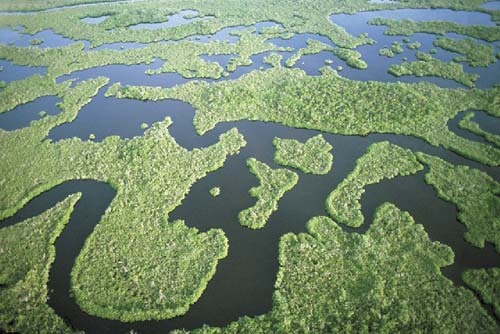 Florida Getaways of the Day - <b>Ten Thousand Islands:</b> Adventures in a nearby wilderness