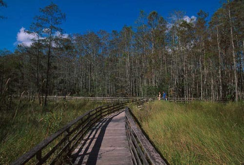 Florida Getaways of the Day - <b>Naples:</b> Sanctuary for bird-watchers