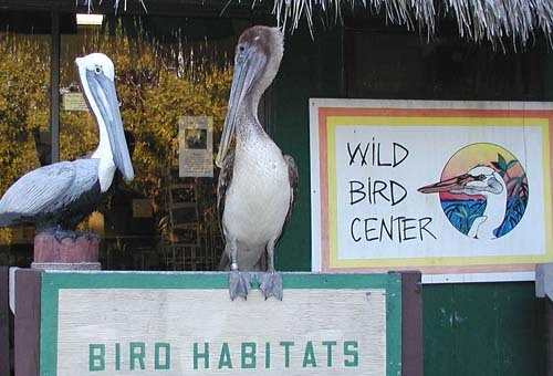 Florida Getaways of the Day - <b>Tavernier:</b> This place is for the birds