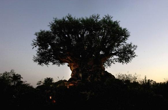 "A sunset lights Disney's Animal Kingdom ""Tree of Life."""