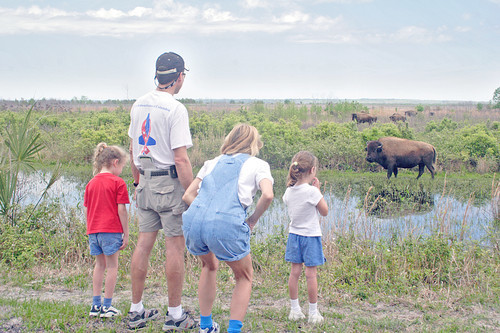 Florida Getaways of the Day - <b>Paynes Prairie:</b> Bison? In Florida?