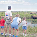 <b>Paynes Prairie:</b> Bison? In Florida?