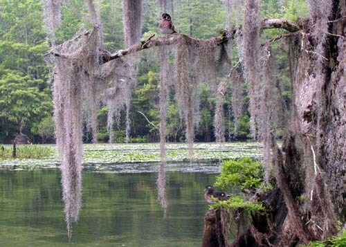 Florida Getaways of the Day - <b>Wakulla Springs:</b> Creature from the Black Lagoon