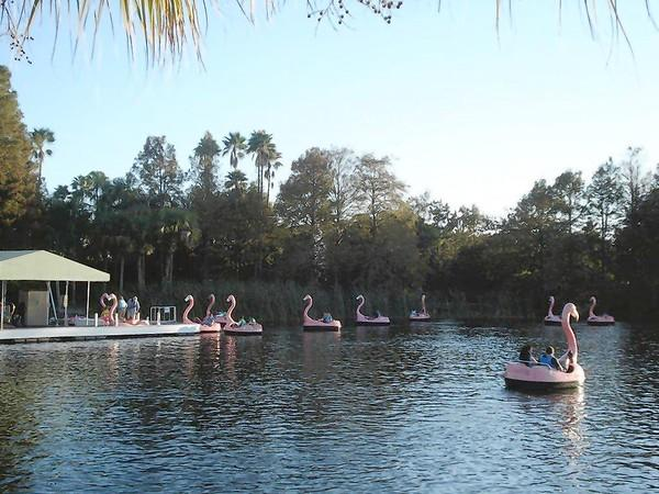Flamingo-inspired paddle boats are available for rent at SeaWorld Orlando
