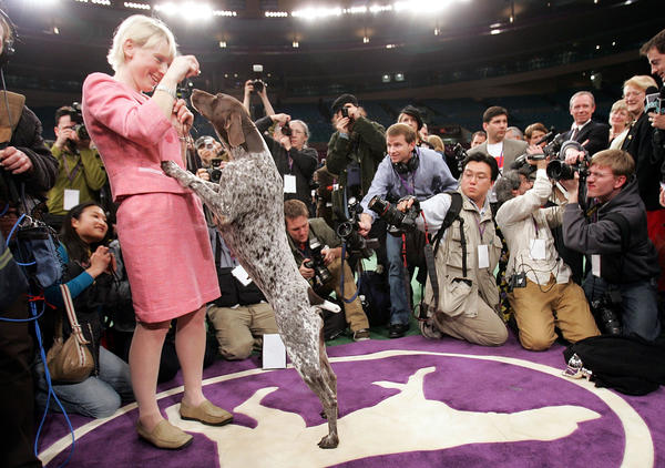 Carlee, a German Shorthaired Pointer, celebrates with handler Michelle Ostermiller after winning the Westminster Kennel Club Dog Show's Best In Show award at Madison Square Garden February 15, 2005 in New York City.