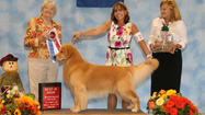 Cody wins a Best in Show