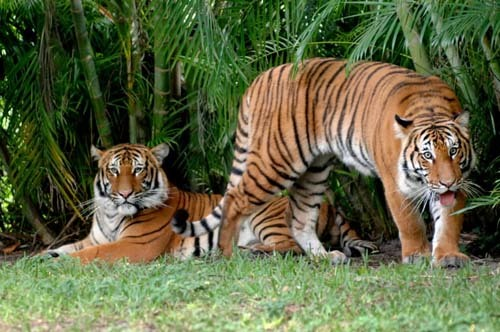 Florida Getaways of the Day - <b>West Palm Beach:</b> Zoo is up close and personal
