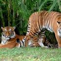 <b>West Palm Beach:</b> Zoo is up close and personal