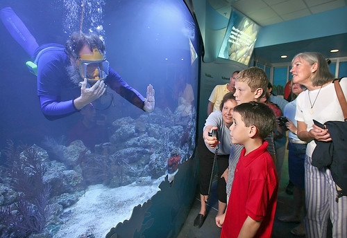Florida Getaways of the Day - <b>Key West:</b> Aquarium exhibit spotlights Florida sea life