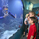 <b>Key West:</b> Aquarium exhibit spotlights Florida sea life