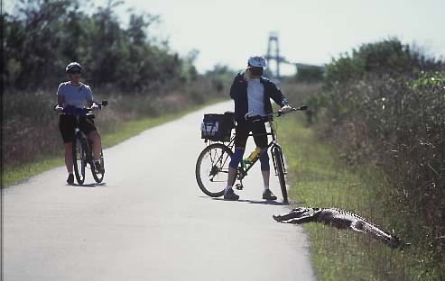 Florida Getaways of the Day - <b>Shark Valley:</b> Ride on the wild side