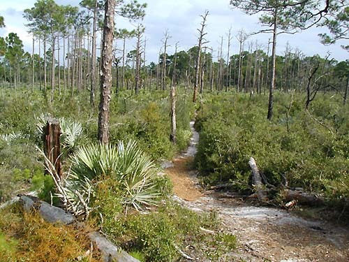 Florida Getaways of the Day - <b>Jupiter:</b> State park is mecca for hikers, bikers and campers