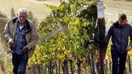 California's 2012 wine grape harvest largest to date