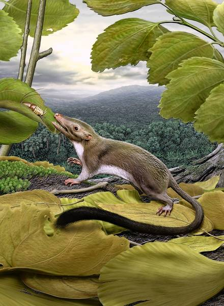 An artist's rendering of the hypothetical placental mammal ancestor, a small, insect-eating animal.