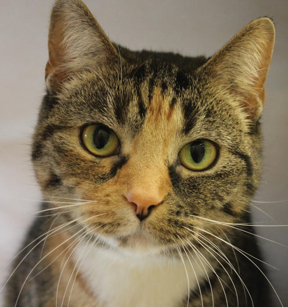 Arai is available for adoption, just in time for Valentine's Day.