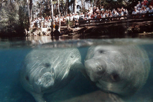 Best of Florida Travel -- Homosassa Springs Wildlife State Park in Homosassa