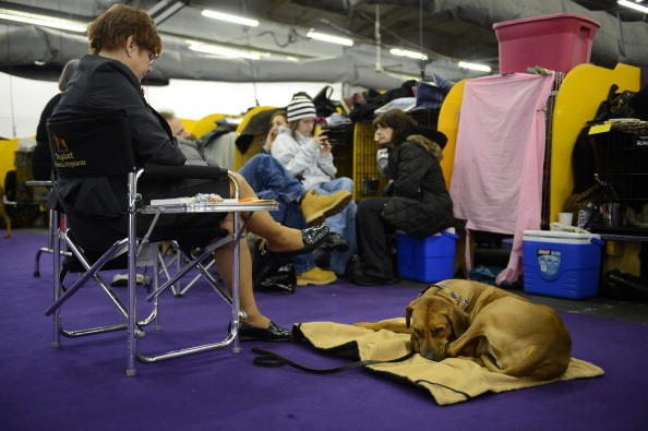 137th Westminster Kennel Club Dog Show: Its all hurry up and wait, hurry up and wait. Im exhausted.