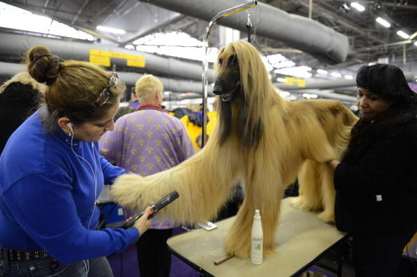 137th Westminster Kennel Club Dog Show: But I love mani-pedis.