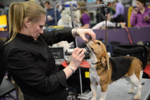 137th Westminster Kennel Club Dog Show: Going to the barber.