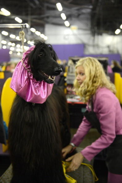 137th Westminster Kennel Club Dog Show: This purple thing is so embarrassing.