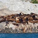 Cruise to Alaska for wildlife